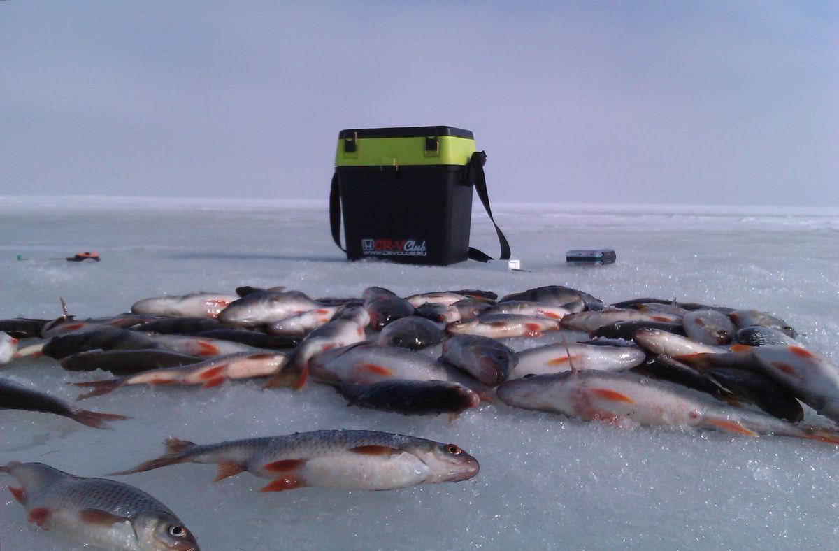 Озеро Чудское